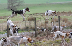 1411 141 Lazonby Hound Trailing | by Al S