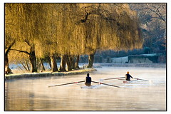 Rowing on the Wey | by Nicoze