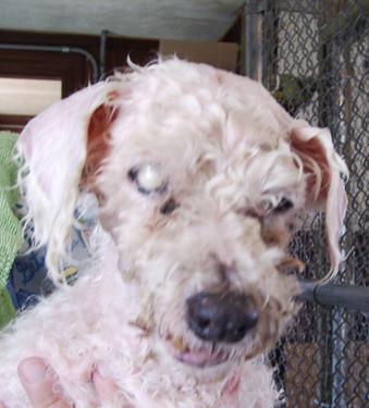 Little Caesar Dog Treats Coupons