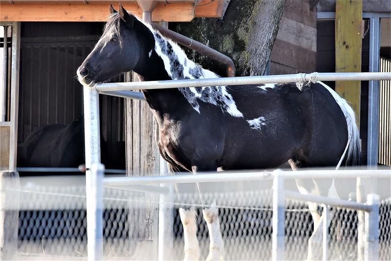 Horses 16.02 (1)