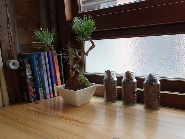 可愛的小植栽@波提娜麗精品咖啡