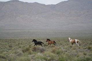 Wild Horses | by elizabethfoote