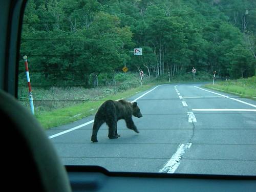 ヒグマ遭遇(知床) Ezo Brown Bear!