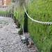 Thames Moss
