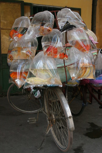 Fish in plastic bags loaded on a bike | by Jungle_Boy