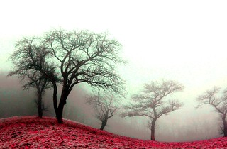 MISTY DREAMS... | by Weirena