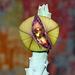 Tromotriche revoluta flower Time-Lapse