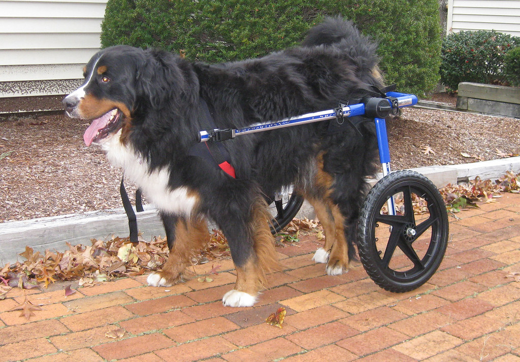 Image Result For Dog Wheelchair That