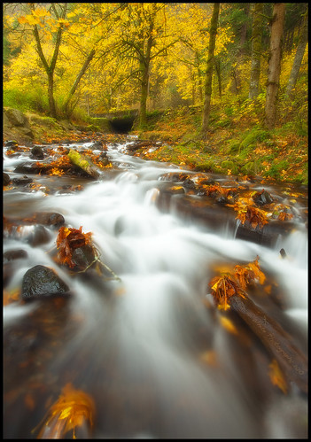 Nutmeg and Pumpkin Creek | by Darren White Photography