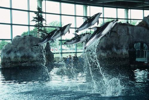Image Result For Shed Aquarium
