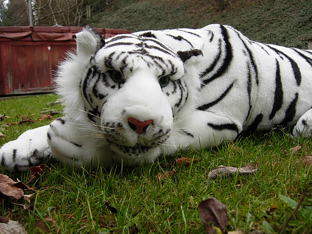 Plush White Tiger 33 Inches Long Plush Tiger That I Love T Flickr