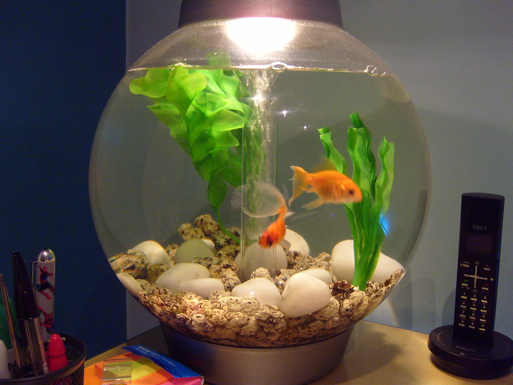 Image Result For Fish Bowl And