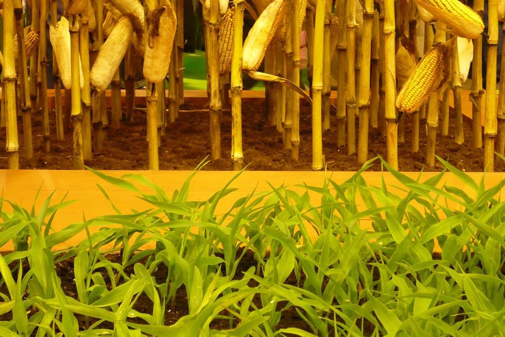 25 f vrier 2008 paris salon de l 39 agriculture ma s - Salon del agriculture ...