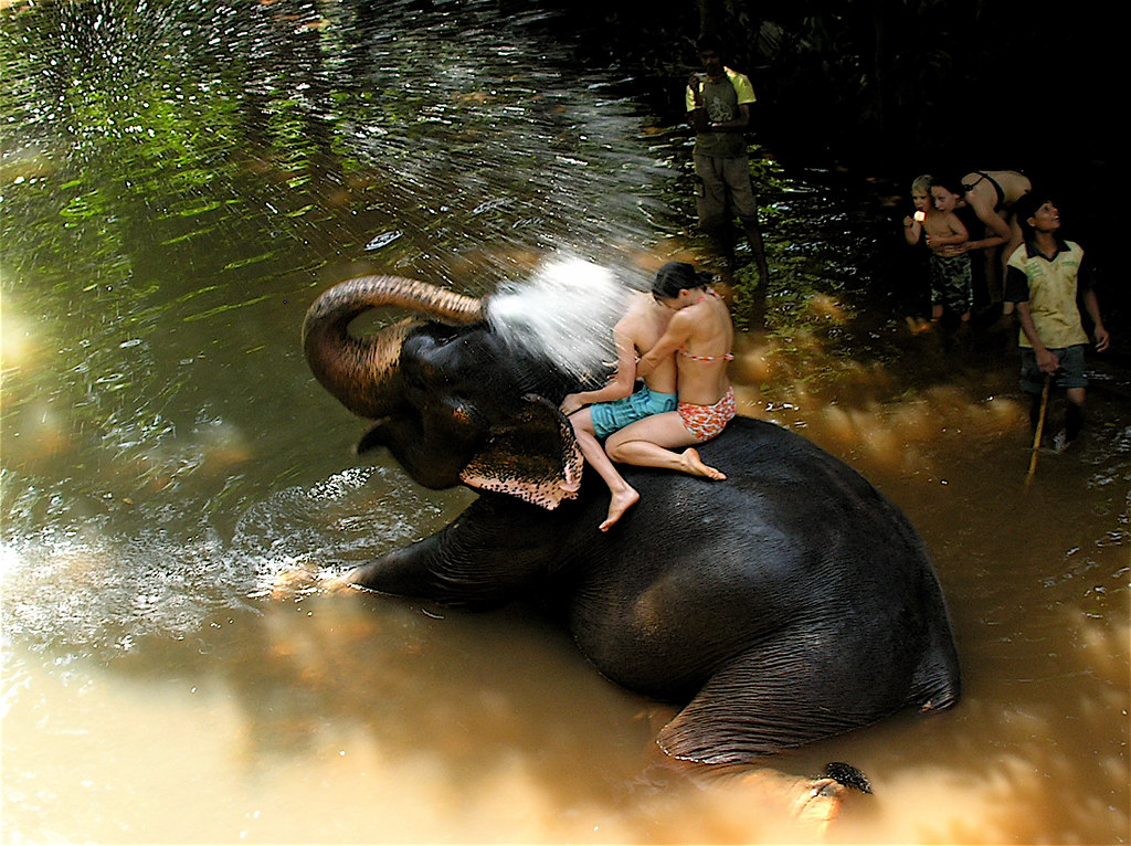 Baby Elephant Fun  During Bathing At The Sahakari Spice -7479