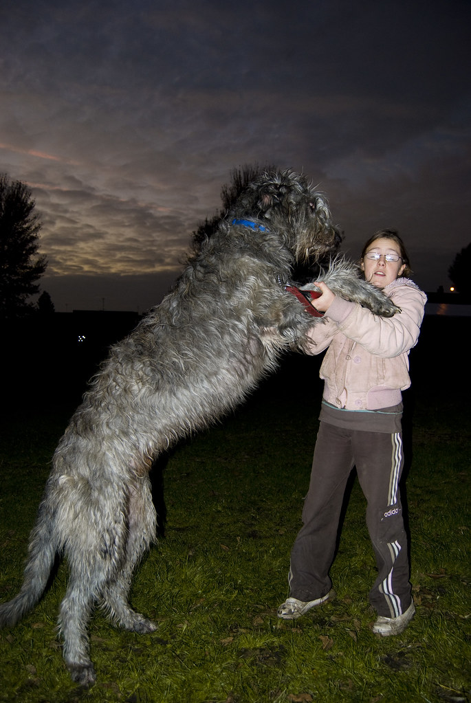 Pictures Of A Huge Dog