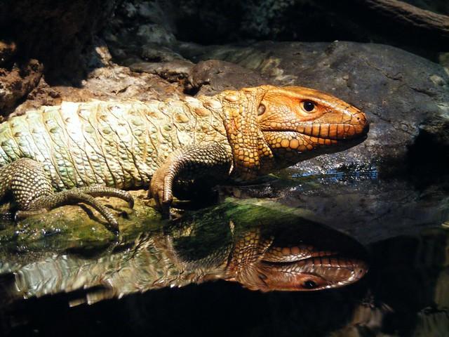 Image Result For Chattanooga Aquarium
