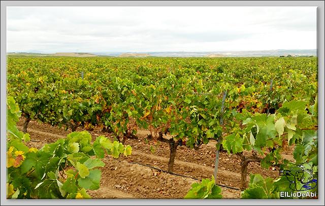 Uvas y Vino haciendo turismo del Vino 4