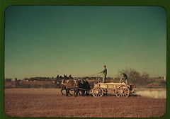 Georgia oat field? Southern U.S.  (LOC) | by The Library of Congress