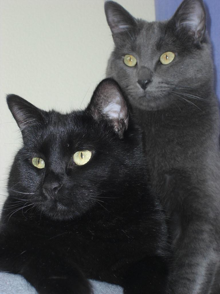 Black Cat Company Logo