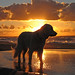 Ditte on the beach at sunset
