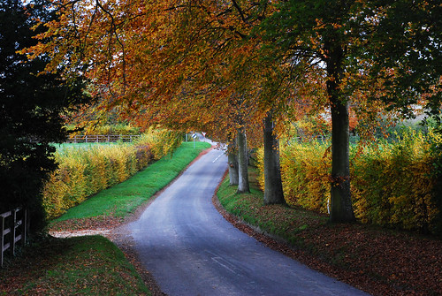 Trees hedgerows and leaves | by Nikonsnapper