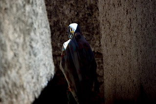 Veiled woman in Harar narrow streets, Ethiopia | by Eric Lafforgue