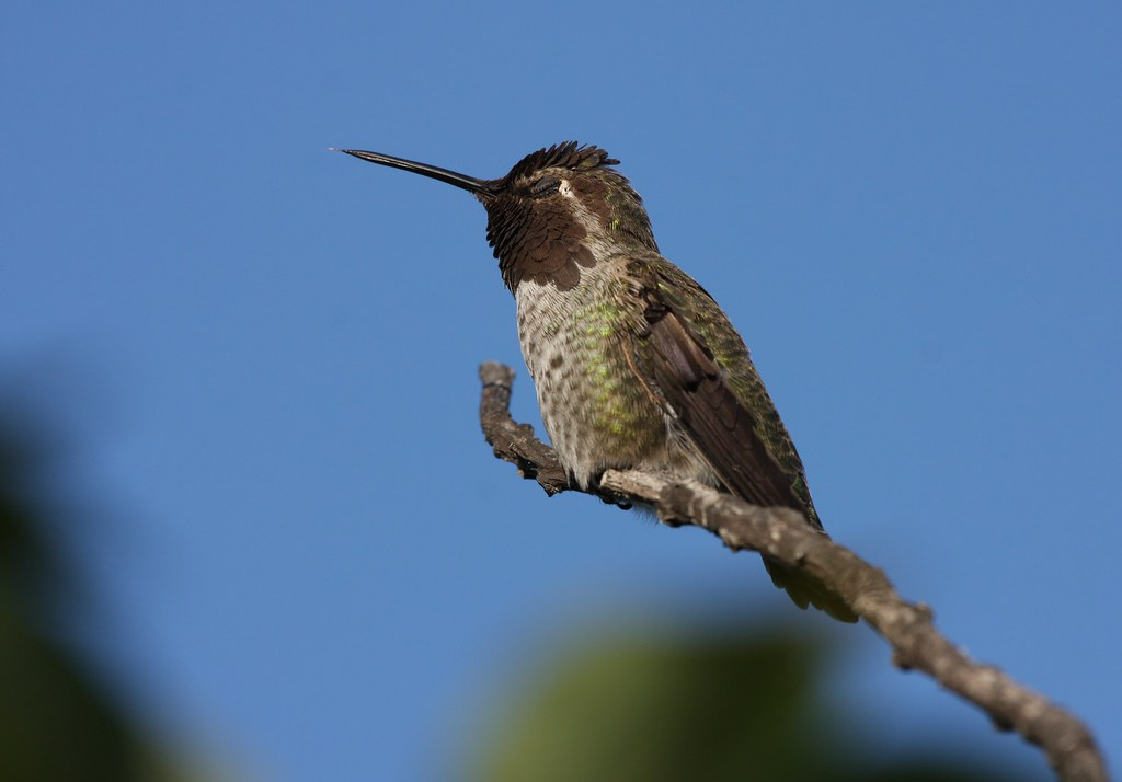 What Do Hummingbirds Eat For Food