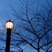 Washington Park lamppost