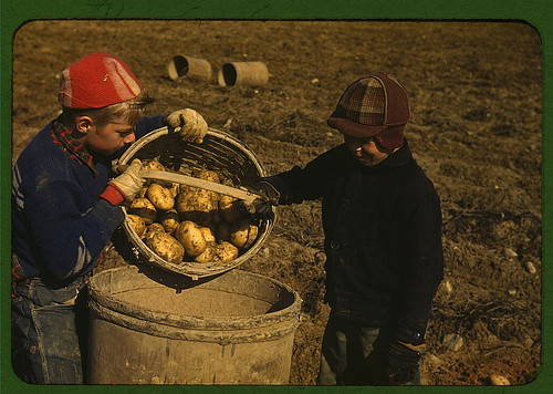 Children gathering potatoes on a large farm, vicinity of Caribou, Aroostook County, Me. Schools do not open until the potatoes are harvested  (LOC) | by The Library of Congress