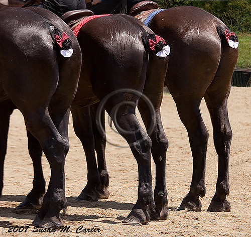Image result for images of horses' rear ends