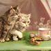 Kitties and Morning Cuppa - old pc - The POPULAR Series 419
