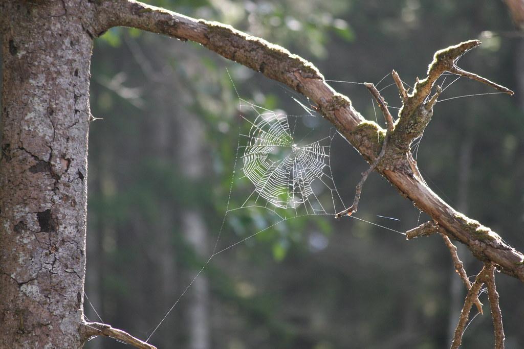 spider web trees driverlayer search engine. Black Bedroom Furniture Sets. Home Design Ideas