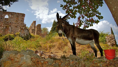 A Donkey at Ancient Mystras, Greece | by Cary Scott