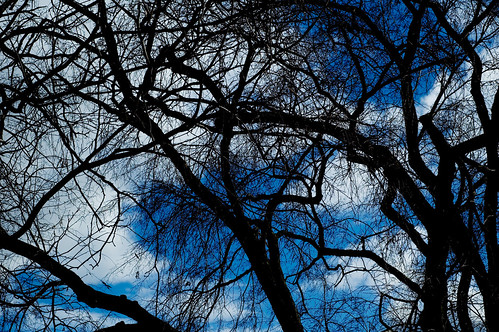Branches in Silhouette | by CarbonNYC [in SF!]