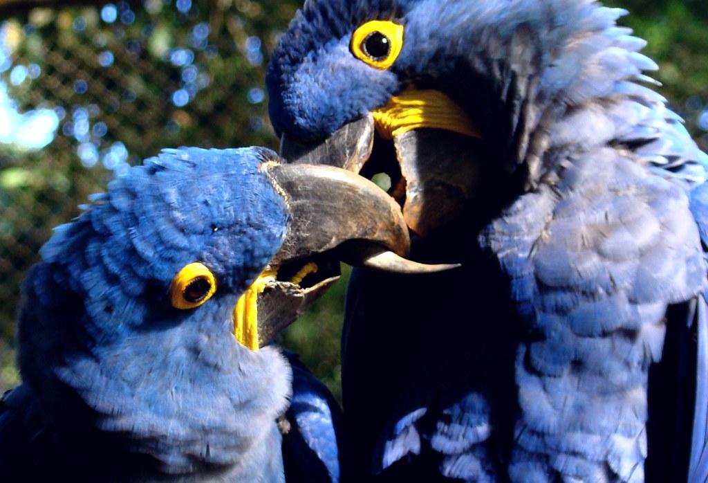 Populares PQ Hoje é domingo!!!! Arara Azul   O BEIJO gente!!! a chuva …   Flickr IP15