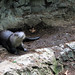 Shaky otter