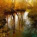 My Wild River … Nature!!!