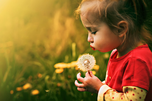 Dandelion Wishes | by AmberSheree