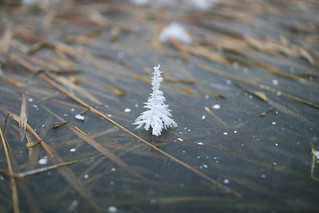 A miniature Christmas Tree! | by Bernt Rostad