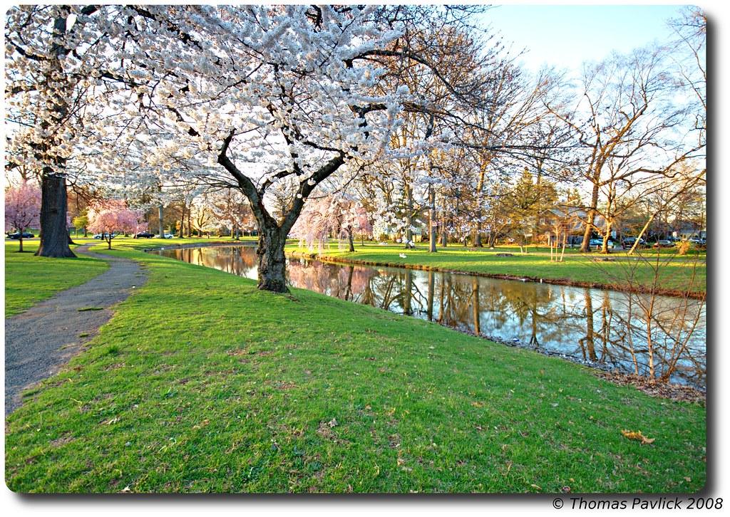 Warinanco Park In Bloom At Sunset Ok Darren After