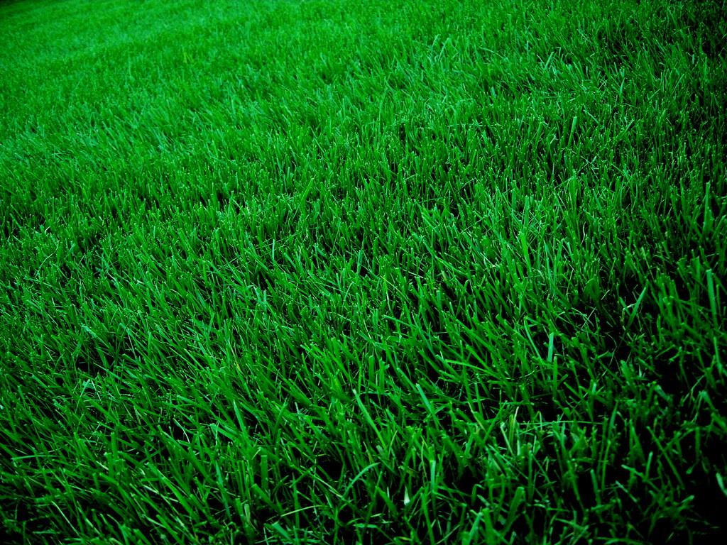 Grass Grass Ian T Mcfarland Flickr