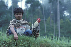 Portrait of young man and his rooster. Indonesia | by World Bank Photo Collection