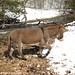 The Daily Donkey 119