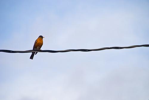 Like a bird on a wire neville brothers lyrics