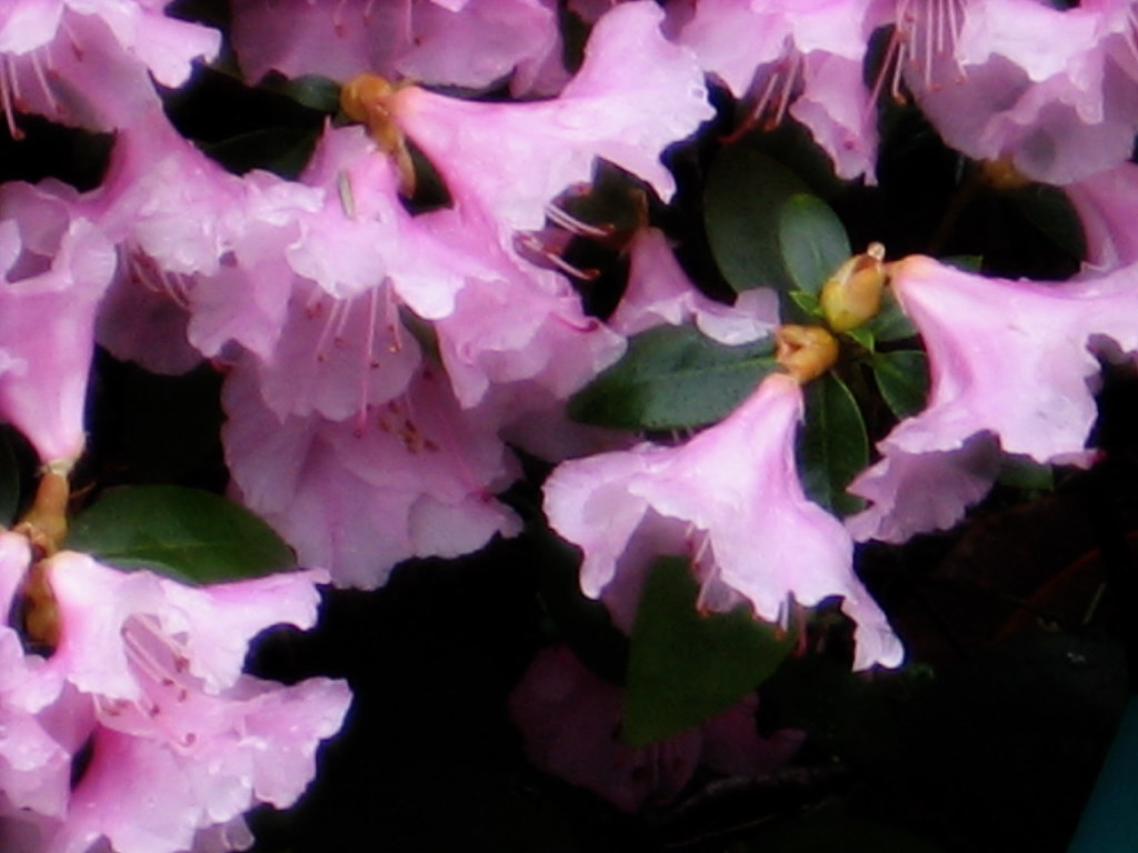 """Waltz of the Flowers Dreamy blossoms of """"Bodega s Crystal …"""