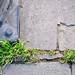 Sidewalk Grass