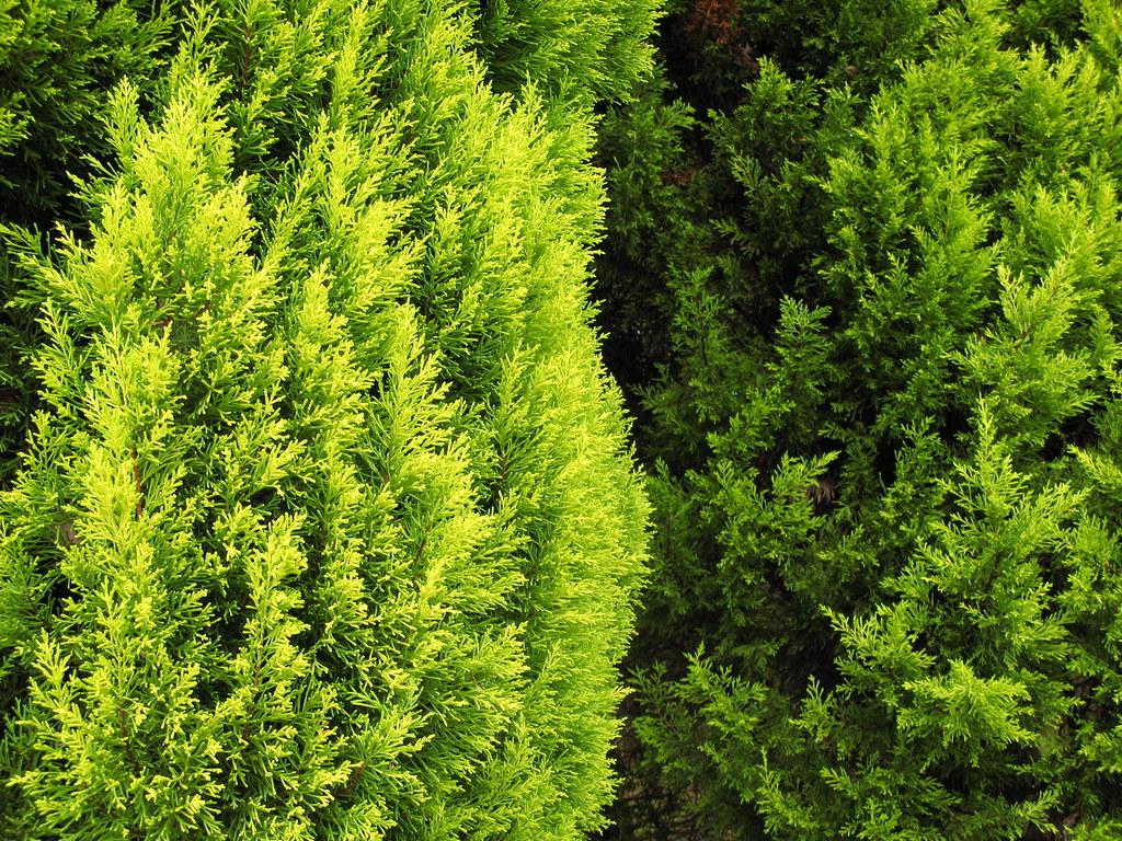green hanahata gardening park fukuoka city. Black Bedroom Furniture Sets. Home Design Ideas
