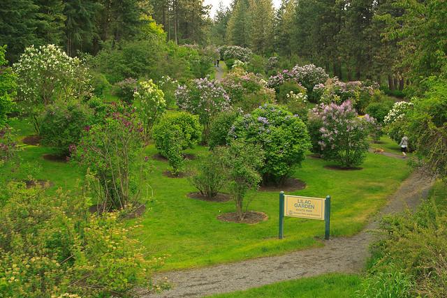 Lilac Gardens At Manito Park Flickr Photo Sharing