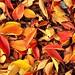 Autumn Carpets 4