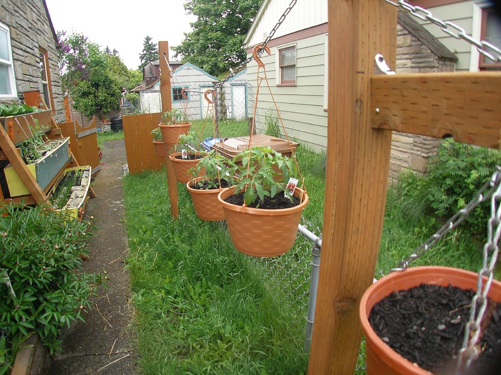 Small Space Gardening, Tacoma 1941 Track Home | see more Hol… | Flickr